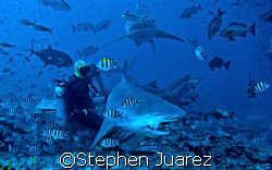 Russi  Bull Shark  Shark Marine Reserve  Fiji,Amazing pla... by Stephen Juarez 